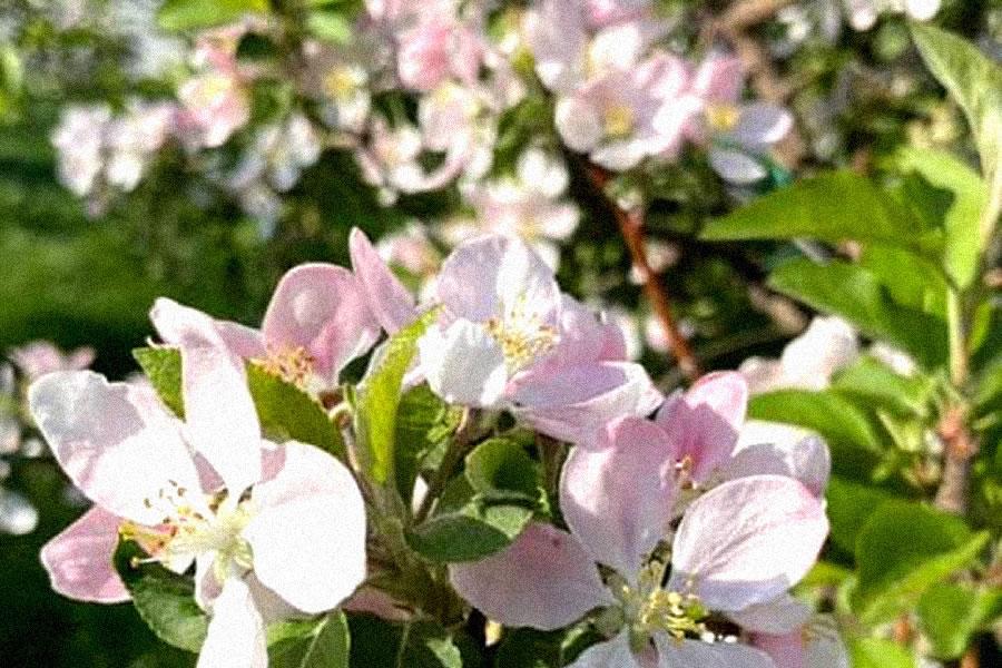 duminica floriilor sa va aduca bucurie in suflet si credinta in vremuri mai bune